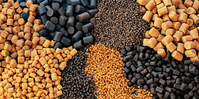 How to start a fish feed production business plan